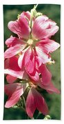 Kashmir Tree Mallow  Beach Towel