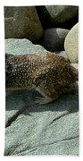 Keeping An Eye On The Ocean Beach Towel