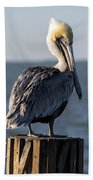 Key Largo Florida Yellow Headed Pelican Beach Towel