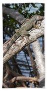Key West Iguana In Mangrove 3 Beach Towel