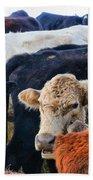 Kibler Valley Cows Beach Towel