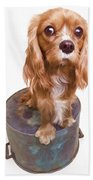 King Charles Spaniel Puppy Beach Towel by Edward Fielding