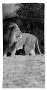 King Of Beasts Black And White Beach Towel