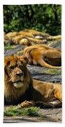 King Of The Pride Beach Towel