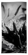 King Protea Exotic Tropical Flowers Beach Towel