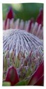 King Protea Island Flowers Jewel Of The Garden Beach Towel