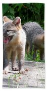 Kit Fox12 Beach Towel