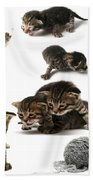 Kitten Collage Beach Towel