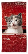 Kitten In Red Drawer Beach Towel by Garry Gay
