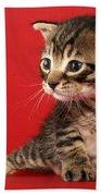 Kitten On Red Beach Towel