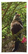 Kitty In The Roses Beach Towel