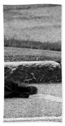 Kitty In The Street Black And White Beach Towel