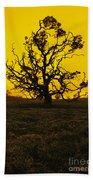 Koa Tree Silhouette Beach Towel