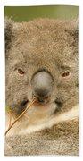 Koala Snack Beach Towel by Mike  Dawson