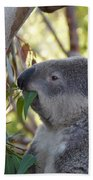 Koala Time Beach Towel