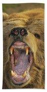 Kodiak Bear Ursus Arctos Middendorffi Beach Towel