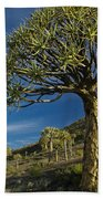 Kokerboom Beach Sheet