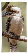Kookaburra Sits In The Ol Gum Tree Beach Towel