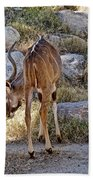 Kudu Near A Waterhole In Living Desert Zoo And Gardens In Palm Desert-california  Beach Towel