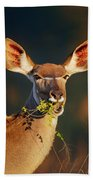 Kudu Portrait Eating Green Leaves Beach Towel