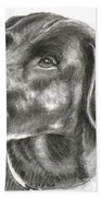 Lab Charcoal Drawing Beach Towel