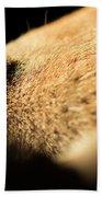 Labrador Scent Beach Towel