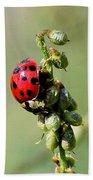 Lady Beetle Beach Towel