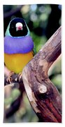 Lady Gouldian Finch Beach Towel