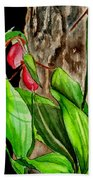 Lady Slippers Beach Towel
