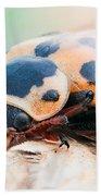 Ladybug Beach Towel