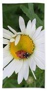 Ladybug On Daisy Beach Towel