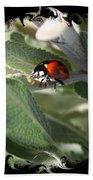 Ladybug On Sage With Swirly Framing Beach Towel