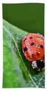 Ladybug With Dew Drops Beach Towel