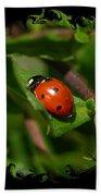 Ladybug With Swirly Framing Beach Towel