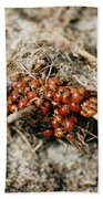Ladybugs En Masse Beach Sheet