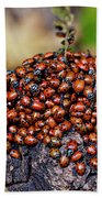 Ladybugs On Branch Beach Towel by Garry Gay