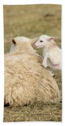 Lamb Jumping On Mom Beach Towel