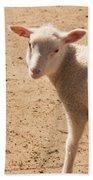 Lamb Looking Cute. Beach Towel