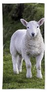 Lamb On The Isle Of Skye Beach Towel