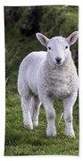 Lamb On The Isle Of Skye Beach Sheet