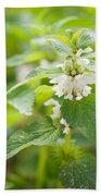 Lamium Album White Flowers Macro Beach Towel