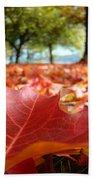 Landscape Trees Park Art Prints Autumn Fall Leaves Baslee Troutman Beach Towel