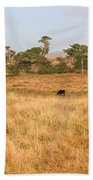 Landscape With Cows Grazing In The Field . 7d9957 Beach Towel