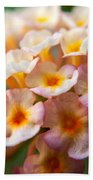 Lantana-1 Beach Towel