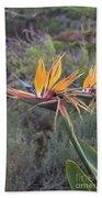 Large Bird Of Paradise Flower In Full Bloom  Beach Towel