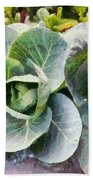 Large Leaves Of A Cabbage Plant Beach Towel