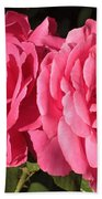Large Pink Roses Beach Towel
