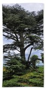 Large Trees At Chateau De Chaumont Beach Sheet