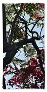Late Afternoon Tree Silhouette With Bougainvilleas I Beach Towel