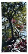 Late Afternoon Tree Silhouette With Bougainvileas II Beach Towel
